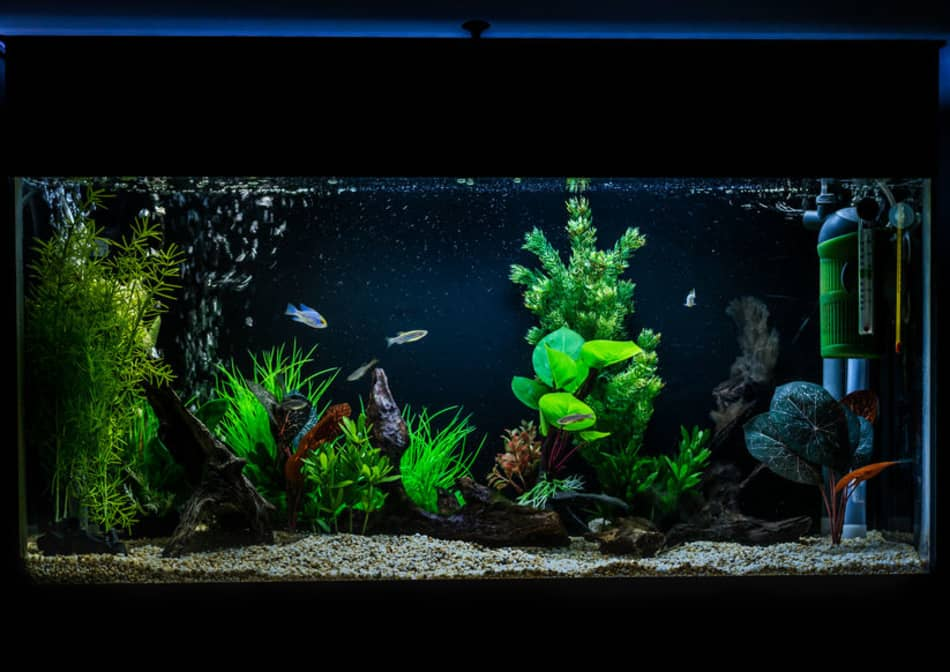 can you add too much bacteria to a fish tank