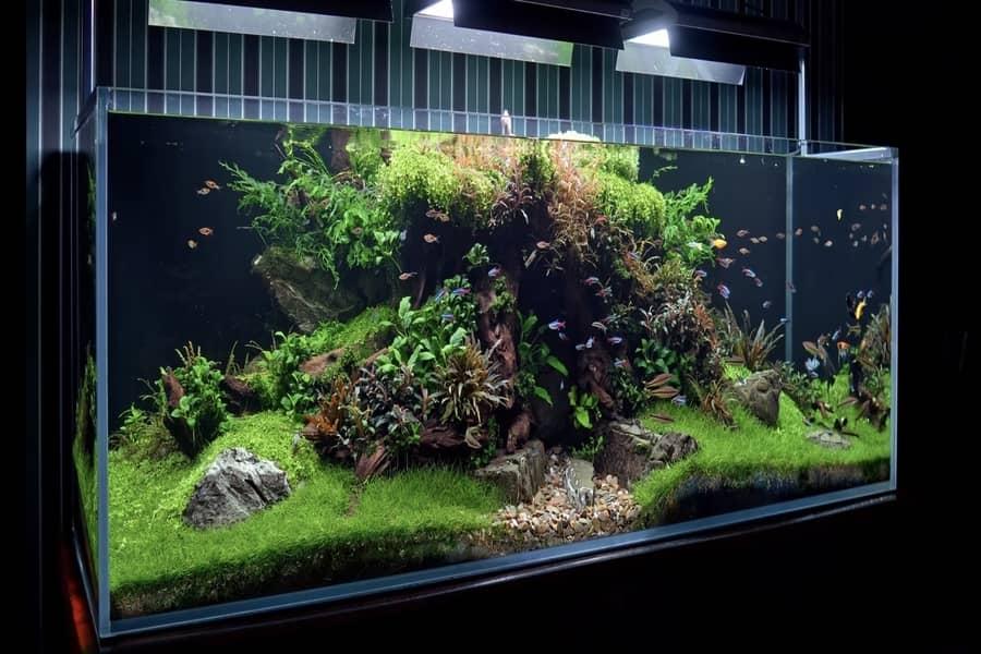how often to add bacteria to aquarium
