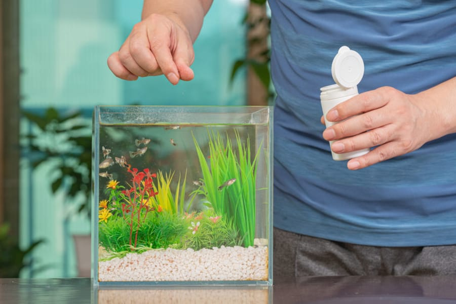 how to feed multiple fish in one tank