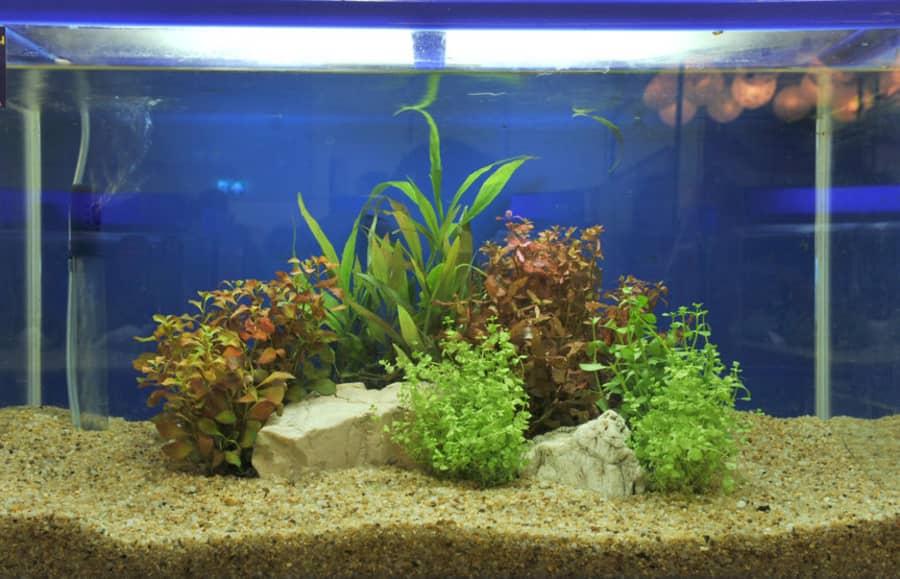 how often to change gravel in fish tank