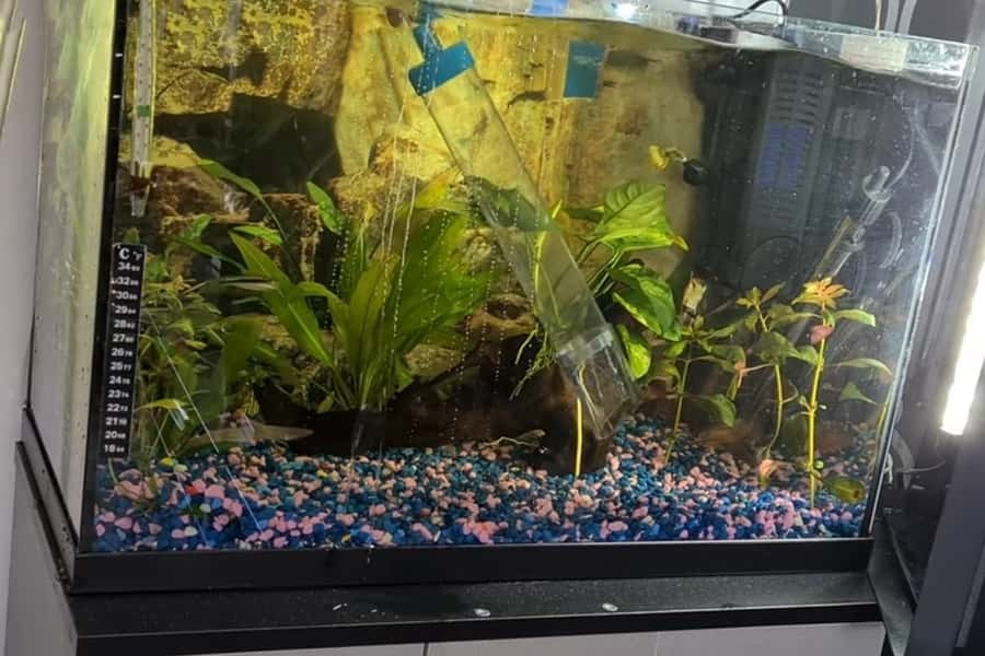 how often should you clean fish tank gravel