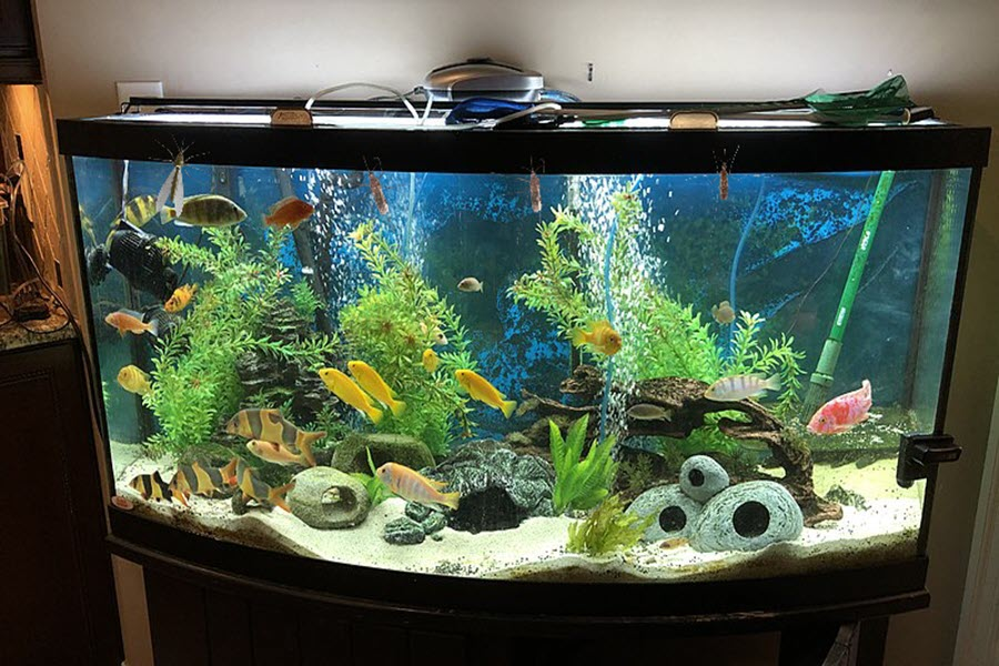 do fish tanks attract mosquitoes