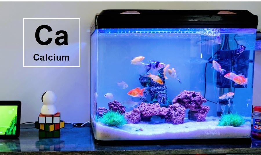 how to add calcium to freshwater aquarium