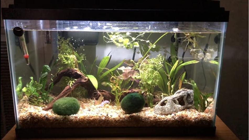 how to build up aquarium substrate
